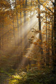 Sunlight shining through trees — Stock Photo
