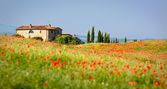 Tuscan painting — Stock Photo