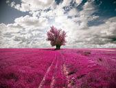 Tree Dreamscape — Stock Photo