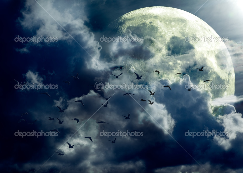 Full moon landscape and flock of birds  Stock Photo #6058022