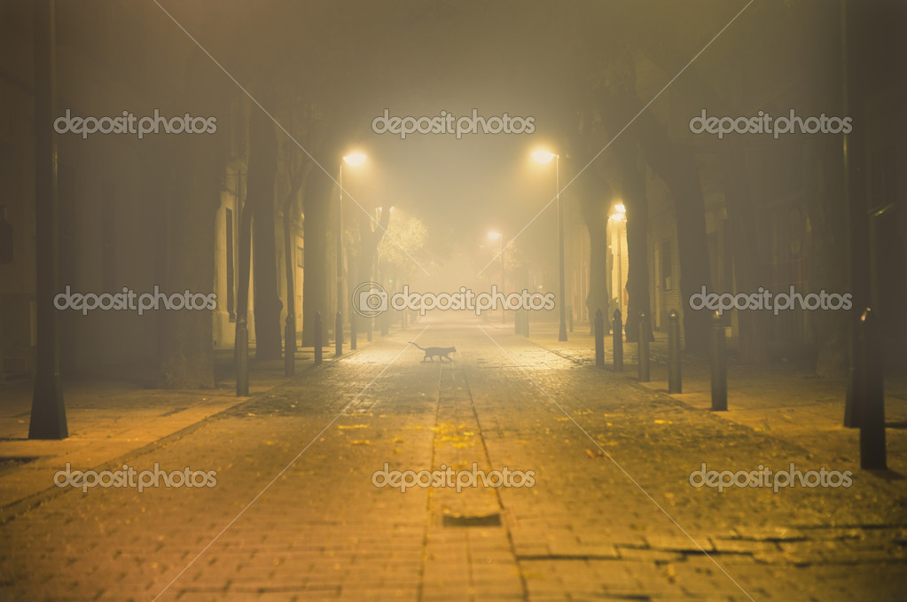 Night urban cityscape with fog and black cat  — Stock Photo #6058410