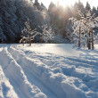 Ski track and winter trees — Stock Photo