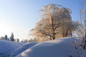 Winter trees — 图库照片