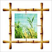Bambou — Photo