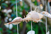 Decoration with seashells and snails — Stock Photo