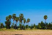 Palms träd i skogen — Stockfoto