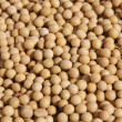 Stock Photo: Soy background