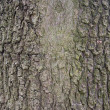 Tree bark — Stock Photo #6224649