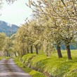Trees in spring - Stock Photo