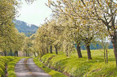 Trees in spring — Stock Photo