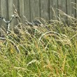 Bicycle hidden in grass — Stock Photo