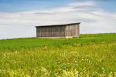 Barn in a meadow — Stock Photo