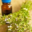 Thyme and tincture — Stock Photo #6009595