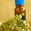 Thyme and tincture — Stock Photo
