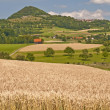 Stock Photo: Rye with hill