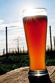 Wheat beer — Stock Photo