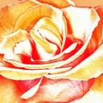 Постер, плакат: Необычная роза