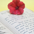 Old love letters and flower — Stock Photo