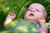 Baby in the cabbage — Stock Photo
