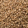 Buckwheat — Stock Photo #5764403
