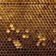 Bee honeycombs — 图库照片