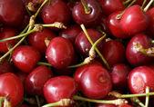 Freshly cherries — Stock Photo
