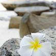 Frangipani — Stock Photo #5912177