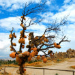 Tree in cappadocia — Stock Photo