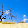 Stock Photo: Tree in desert