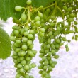 Green grape — Stock Photo #5970546
