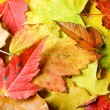 Royalty-Free Stock Photo: Maple leaves background