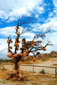 Tree in cappadocia — Photo