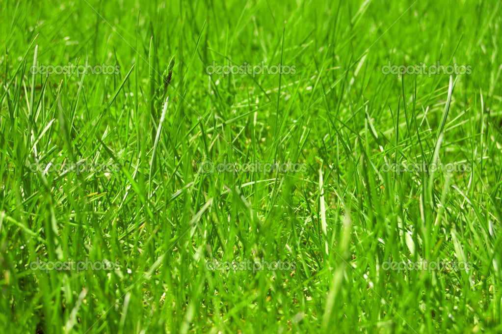 Green grass background front view — Stock Photo #5970520