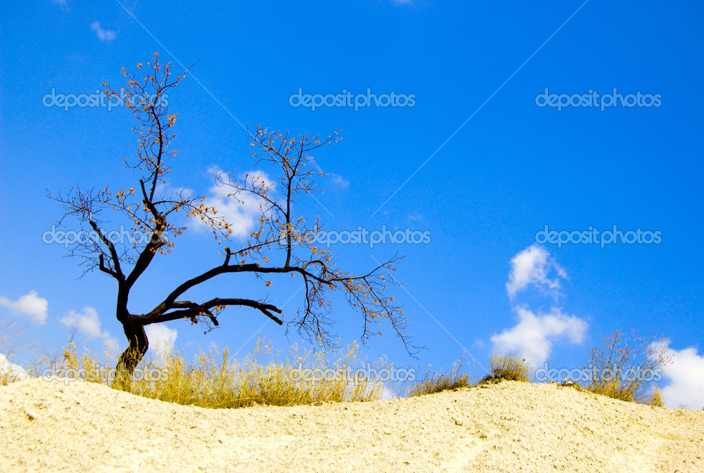 Lonely dry tree in desert — Stockfoto #5970545