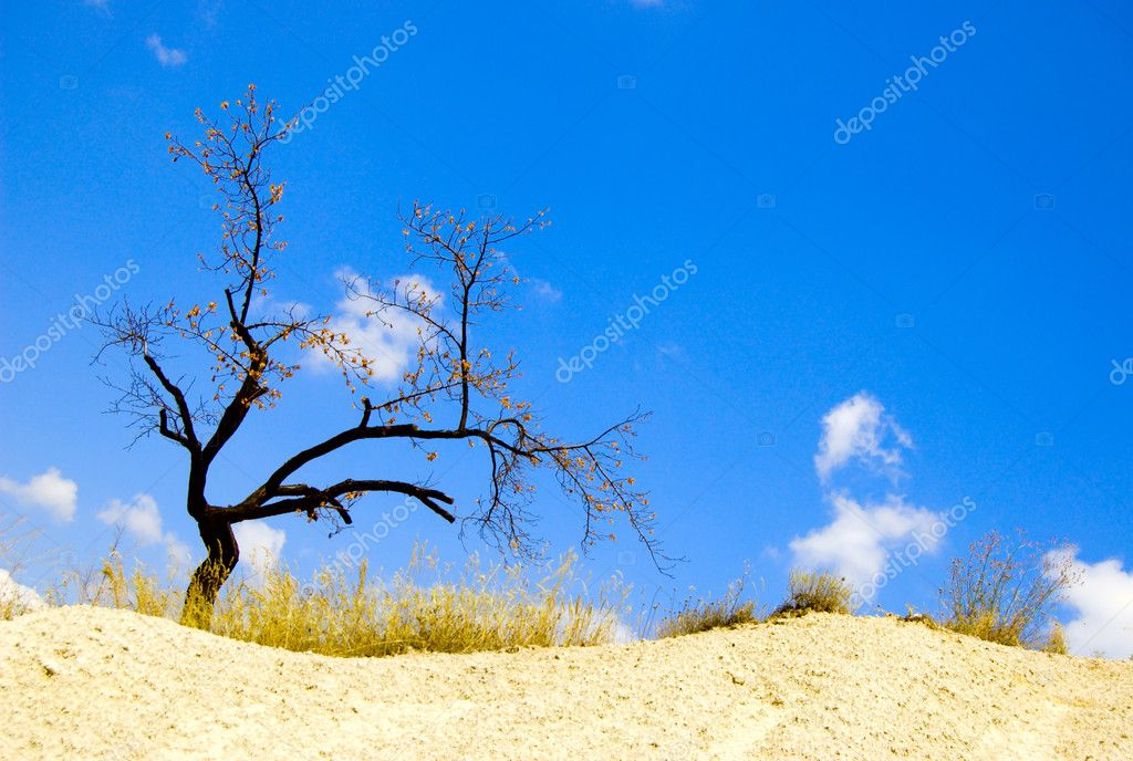 Lonely dry tree in desert  Lizenzfreies Foto #5970545