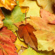 Maple leaves background — Stock Photo
