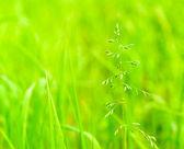 Grass — Foto de Stock