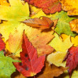 Maple leaves background — Stock Photo #6117769