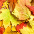 Maple leaves background — Stock Photo #6140643
