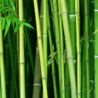 Bamboo — Stock Photo #6710263