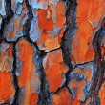 Gum Tree Bark Textures — Stock Photo