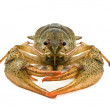 Crustacean — Stock Photo