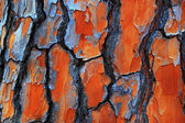 Gum Tree Bark Textures — Stock Photo
