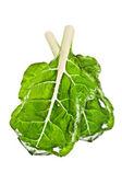 Bok choy leaf — Stock Photo