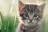 котенок — Стоковое фото