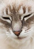 Hoofd van de kat — Stockfoto