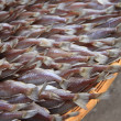 Dried fishs — Stock Photo