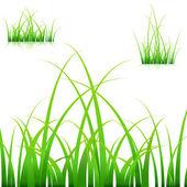 Bladen van gras — Stockvector