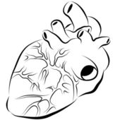 Human Heart Ink Drawing — Stock Vector