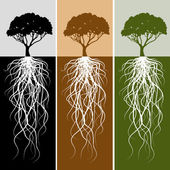 Vertical Tree Root Banner Set — Stock Vector